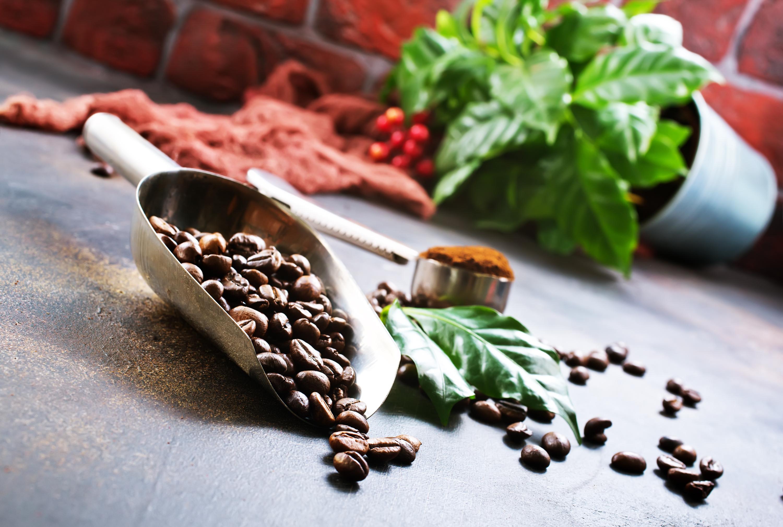 20 år med kaffeforskning